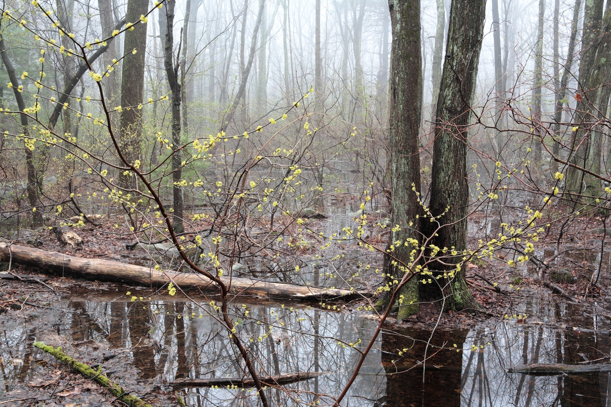 Habitat vernal pool new growth 5258